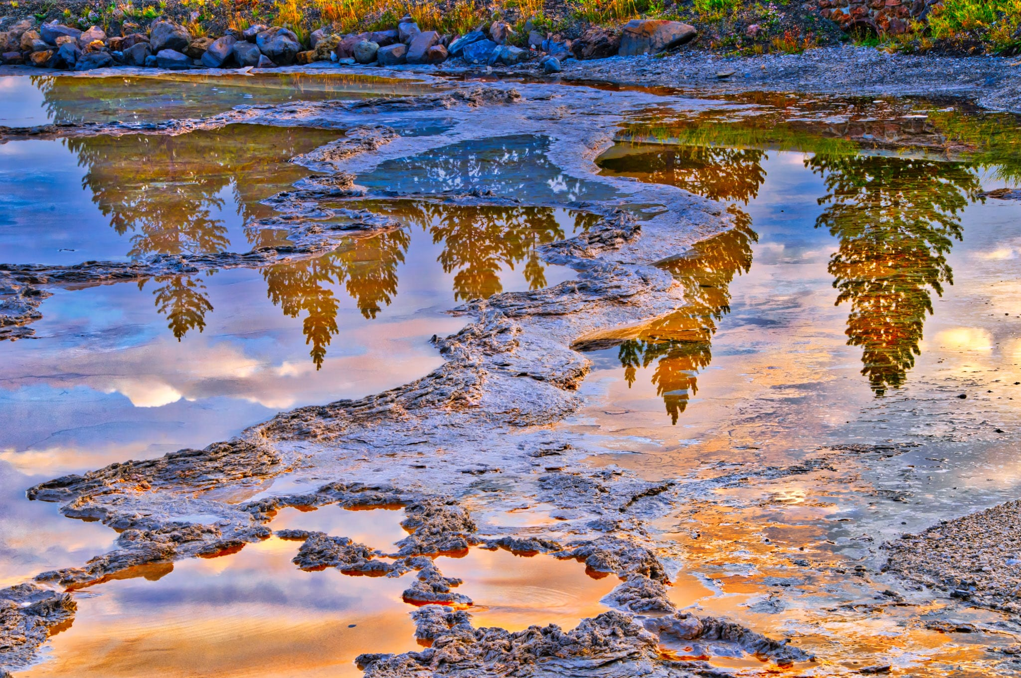 Trees reflected in Fountain Geyser at Sunrise in Yellowstone National Park, Wyoming.