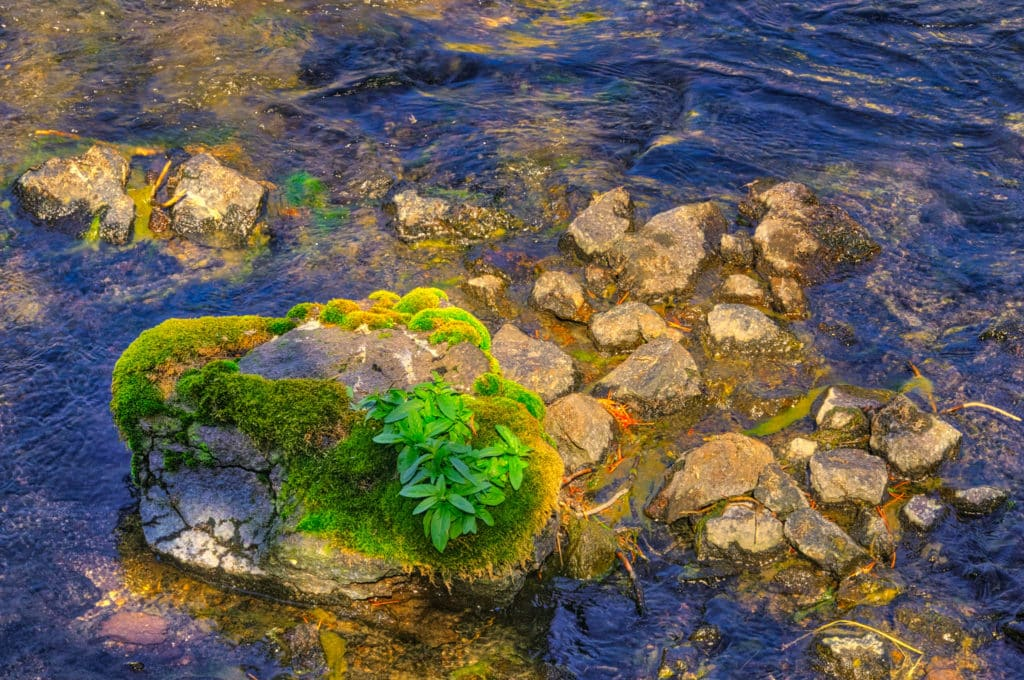 Dappled light and moss at LeHardy's Rapids in the Yellowstone River, in Yellowstone National Park, Wyoming.