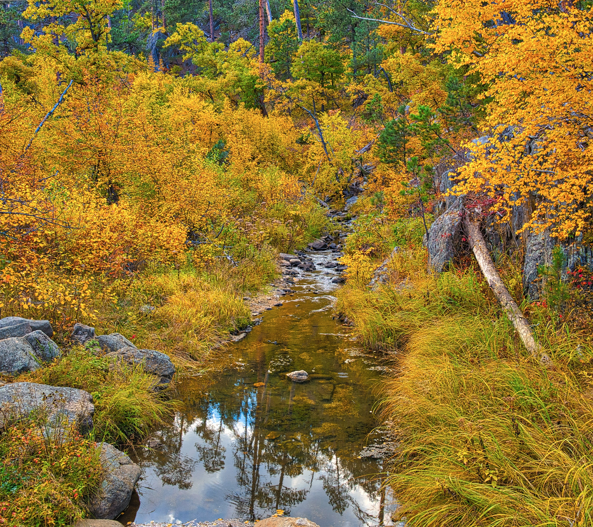 Autumn-colored trees and green pine trees are reflected in a stream along the Iron Mountain Highway in Black Hills National Forest in South Dakota.