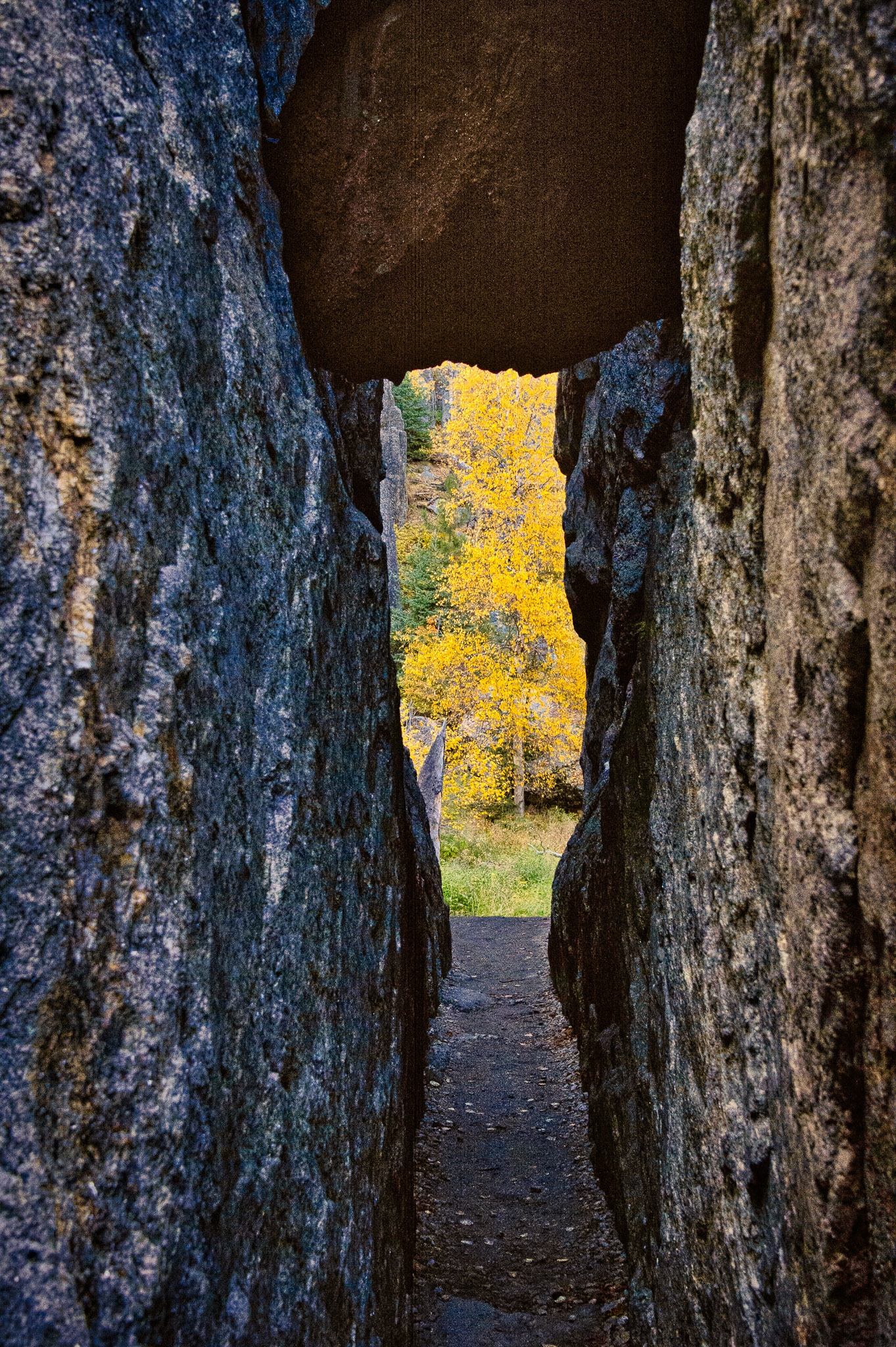 A view from Sylvan Lake through a tunnel to the autumn trees in the distance.