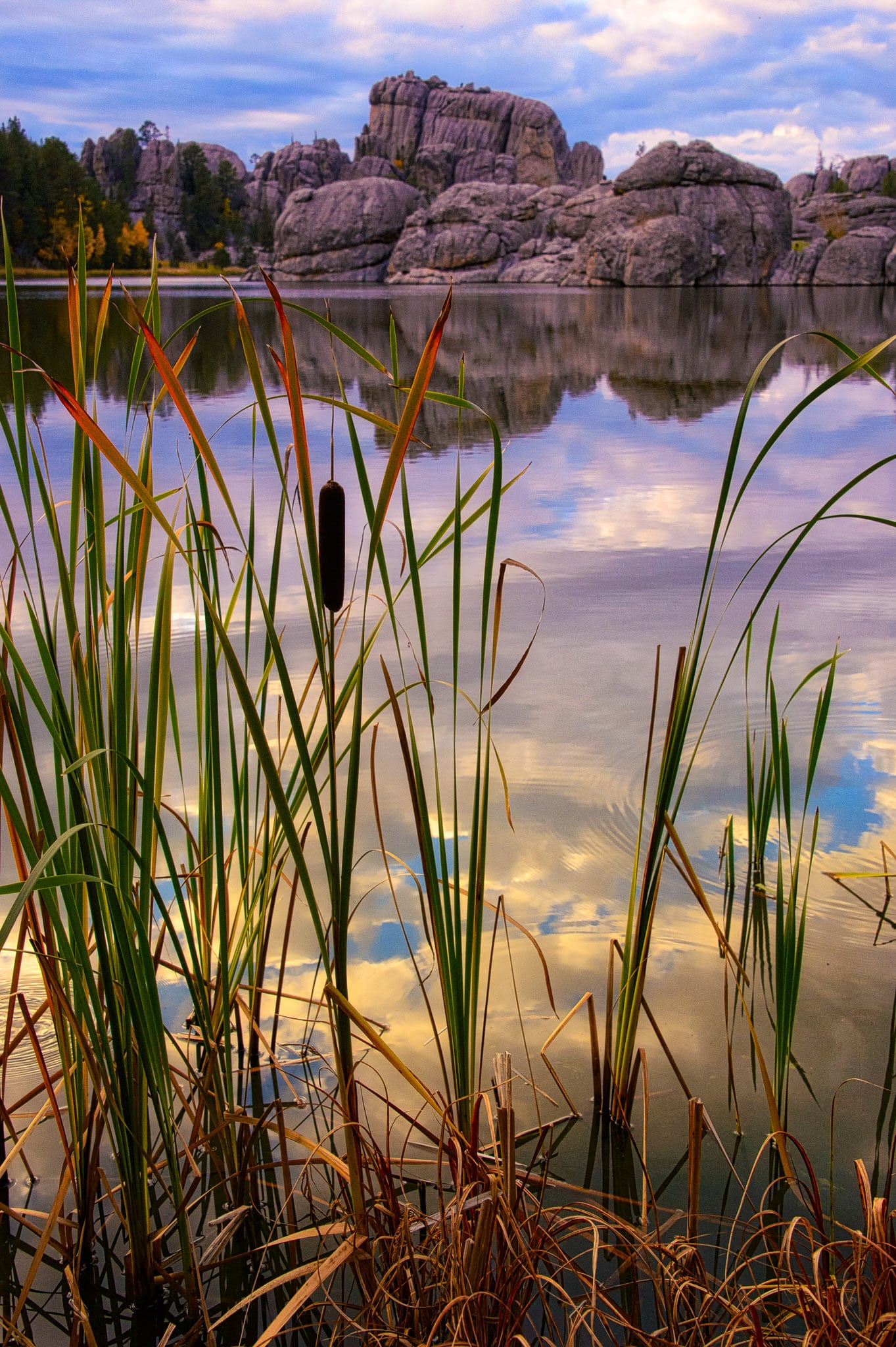 Clouds and granite rock formations are reflected in the still water of Sylvan Lake, with cattails in the foreground.