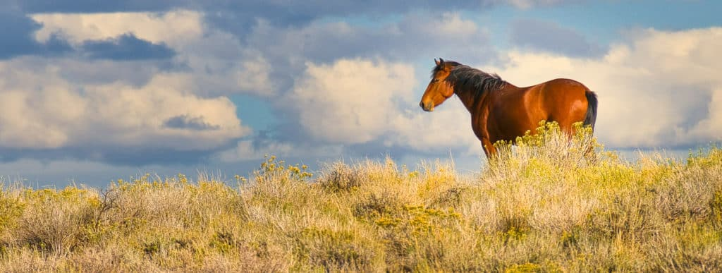 A horse grazes along Glen Bench Road, south of Vernal, Utah.