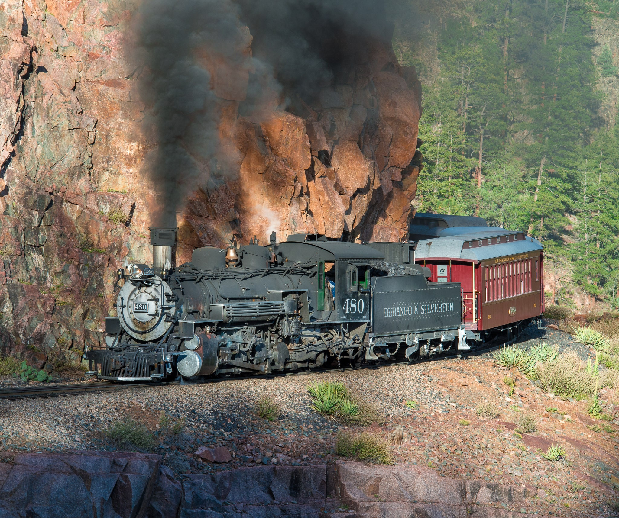 Durango & Silverton Railroad's narrow-gauge steam locomotive 480 comes around the bend pulling a train of historic passenger cars along the highline, parallel to the Animas River between Silverton and Durango, Colorado.