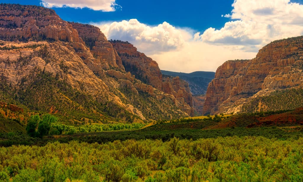 The golden afternoon light lends a romantic feel to this photo looking across a park to the canyon beyond, along Echo Park Road in Dinosaur National Monument, Colorado.