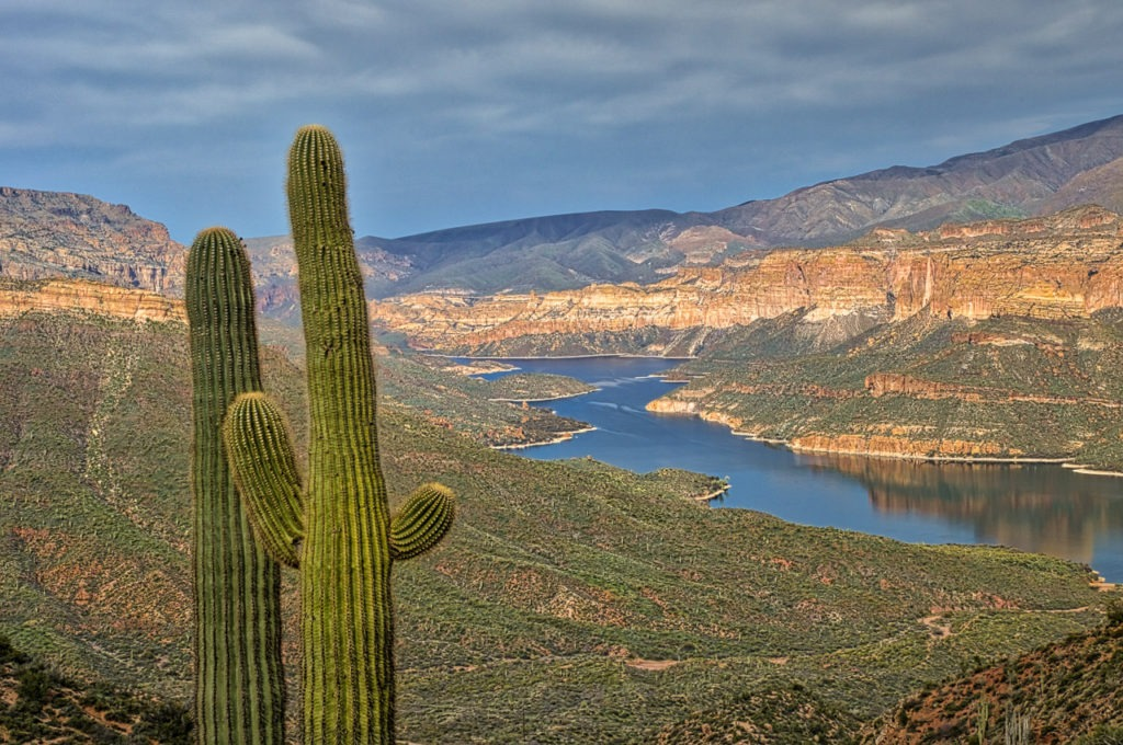 Cacti confer above Apache Lake, east of Phoenix, Arizona.