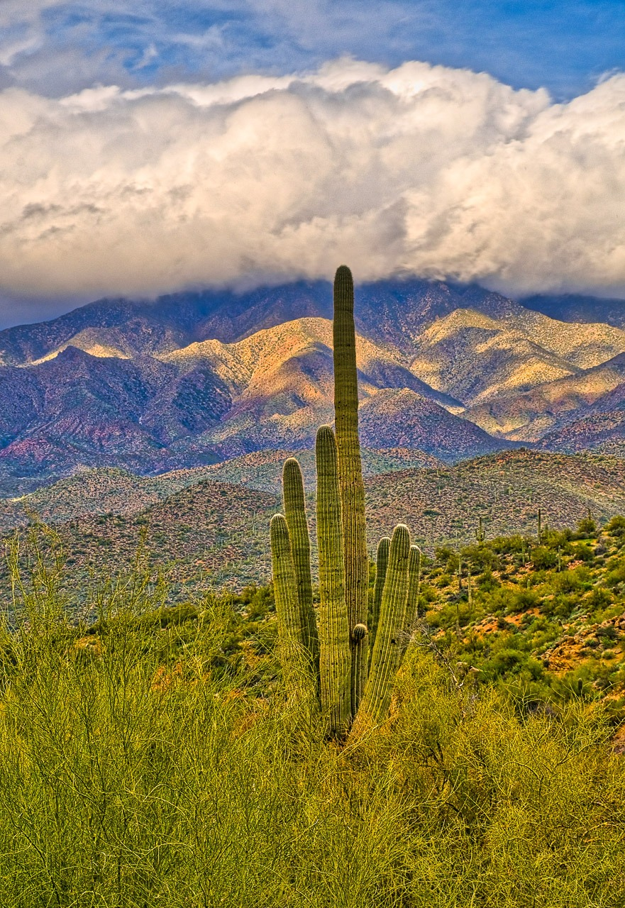 Storm clouds roll in over the saguaro and palo verde along the Apache Trail, east of Phoenix, Arizona.