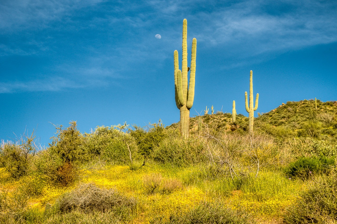 Arizona Spring Wildflowers along the Apache Trail | William