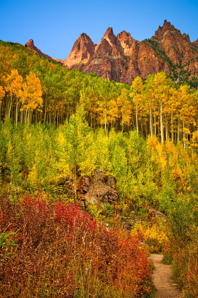 A view along the trail in the Maroon Bells Recreation Area showcases turning aspens and fireweed.