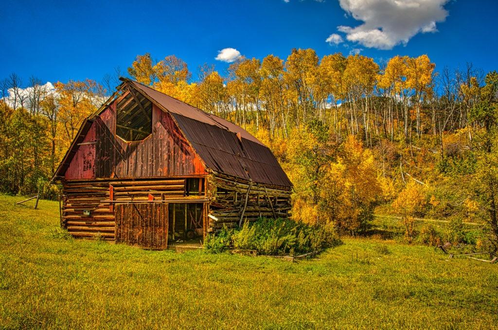 A run-down log barn is nicely backstopped with golden aspens, along Capital Creek Road near Aspen, Colorado.