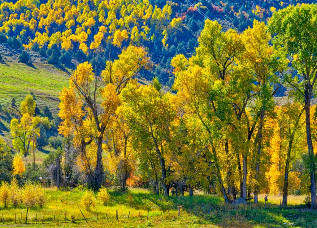 Just past McClure Pass heading toward Paonia Reservoir is an overlook where I stopped to take this photo. The trees were brilliant and the scene was so peaceful. Notice the deer in the lowere right of the frame?