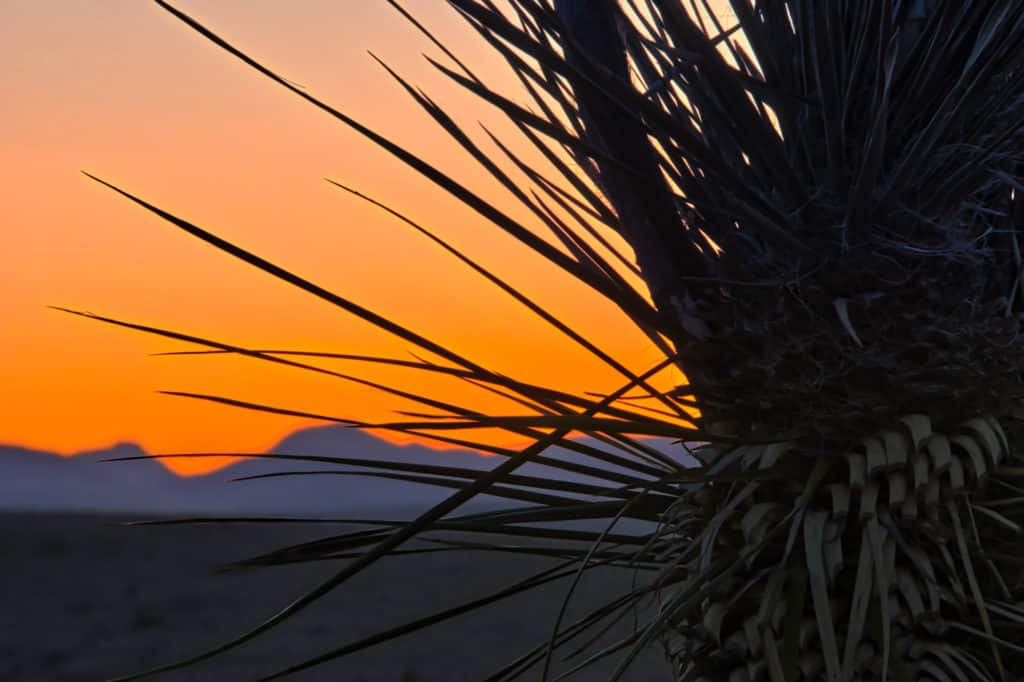The spikey leaves of yucca are silhouetted against blue sunset mountains in City of Rocks State Park, New Mexico.