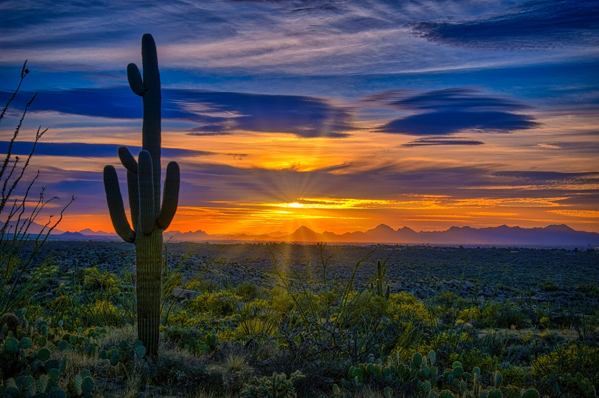 Saguaro cactus silhouetted by setting sun in Saguaro National Park.