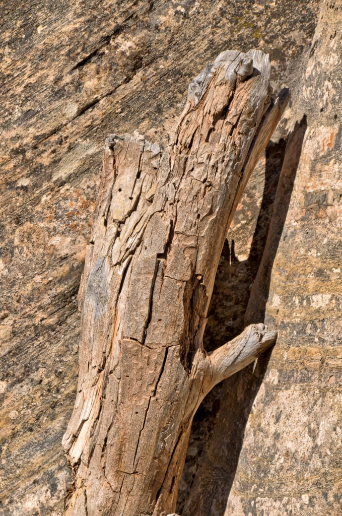 An old wood loog is propped up against similarly colored Wingate Sandstone along Upper Muley Twist Canyon Road, off Burr Trail in Capitol Reef National Park, Utah.