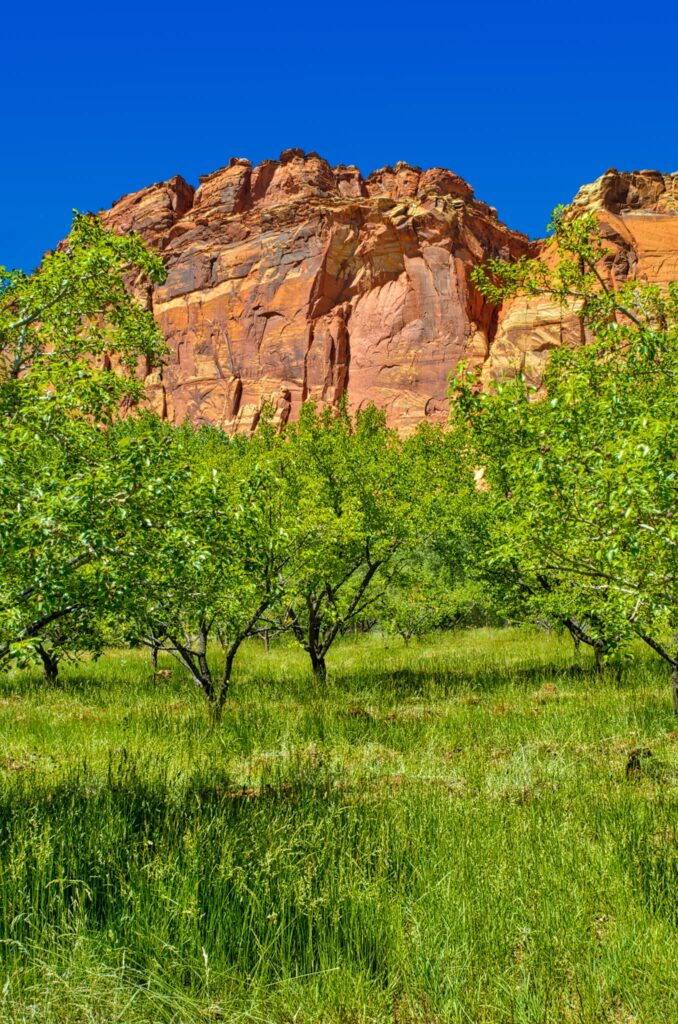 This is a view of the orchard along Camp Ground Road in the Fruita District of Capitol Reef National Park in Utah.