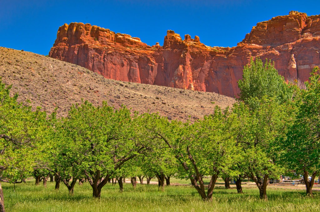 This is a view of some fruit trees in one of the orchards along Camp Ground Road in the Fruita District of Capitol Reef National Park. Some of these heirloom fruit trees are over 100 years old. The National Park Service is maintaining these orchards, replanting trees that have dies of old-age withthe same heiloom species. The only difference seems to be that they are planting in groups of similar species, such as cherries with cherries and peaches with peaches.
