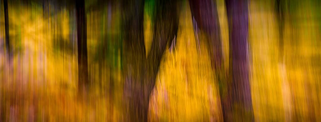 This photograph sun passing through a forest on a sunny day appears in the ArtAscent Journal.