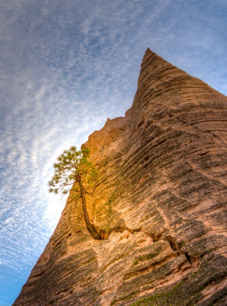 A single Ponderosa pine tree grows on the side of one of the tent formations in Kasha-Katuwe Tent Rocks National Monument in northern New Mexico.
