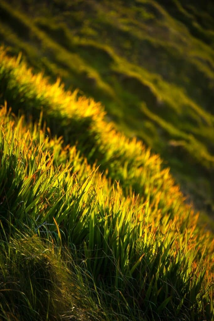 This is a closeup view of grass-covered slopes along Fistal Bay near Newquay in Cornwall, England.