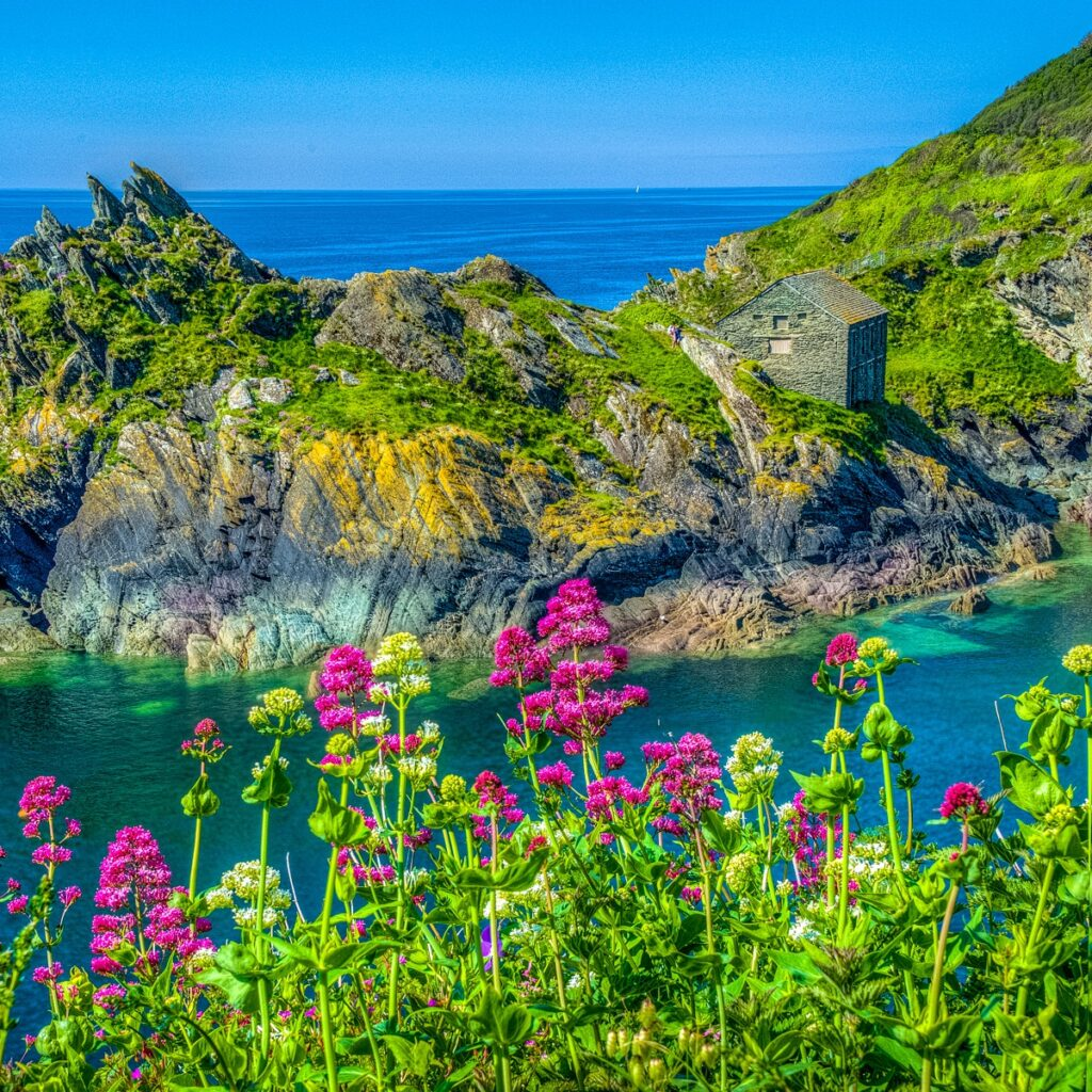Old stone house at the entrance of the port of Polperro, Cornwall, England, United Kingdom. Cornish Valerian is in the foreground.