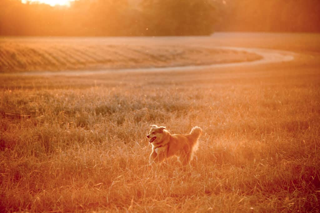 Tukai, the dog, is running through a field off of Brooklyn Road near Evergreen, Alabama.