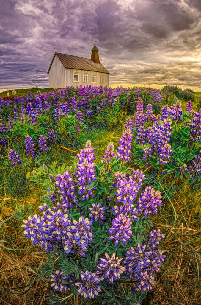 """In early June, lupine flank the cemetery and church of Strandarkirkja, which loosely translates as """"coastal church."""" The name is fitting as the church overlooks the Atlantic and is visible from far at sea. It is locaded on the southern coast of the Reykjanes peninsula in Iceland."""