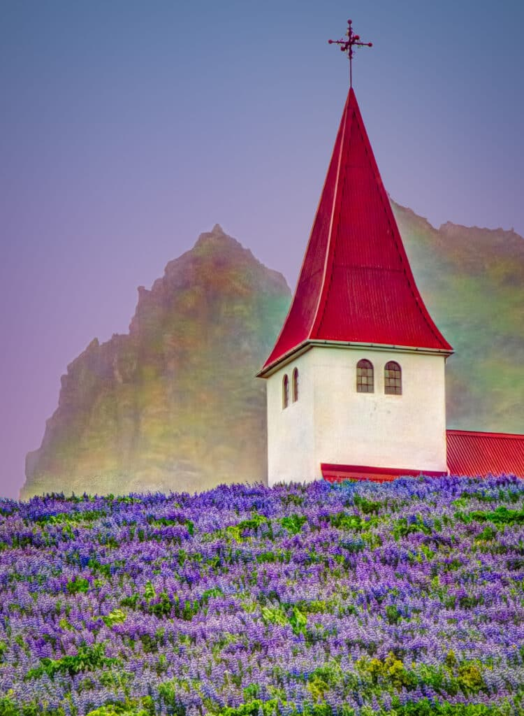 The church at Vik on the south coast of Iceland sits in a field of lupine.