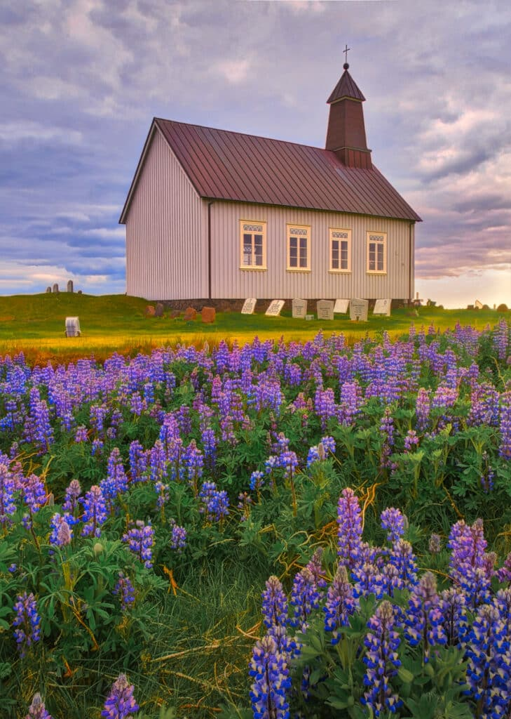 This photo features the lupine that flanks the cemetery and church of Strandarkirkja.